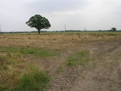 b2ap3_thumbnail_Tree_and_Dead_Grass_-_geograph.org.uk_-_188655.jpg